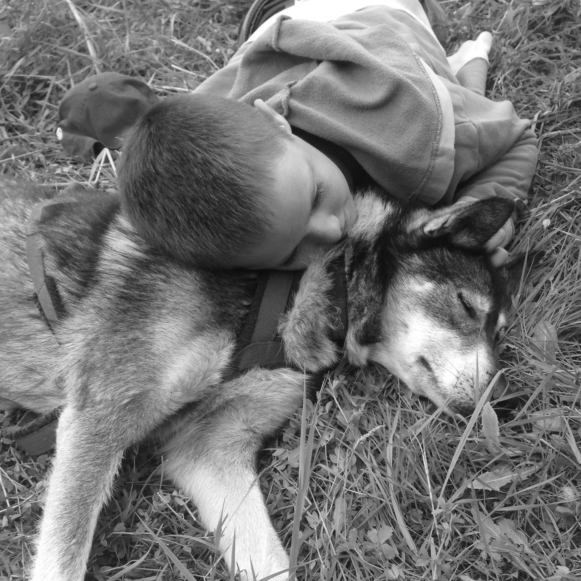 complicité husky