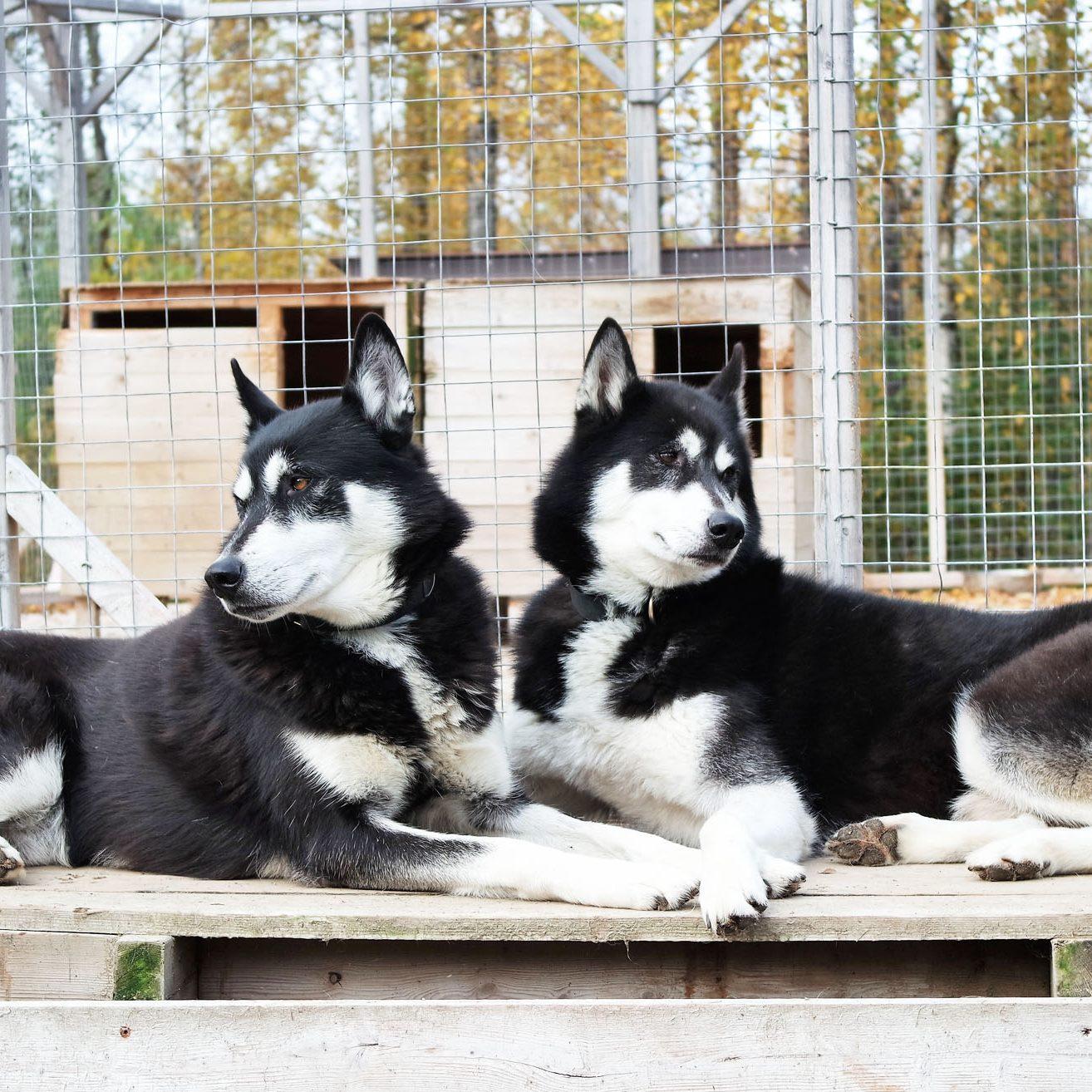 huskies savoie
