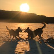 jeu huskies